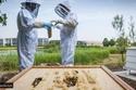 تقدم رولز رويس أفخم وأنقى أنواع العسل في العالم