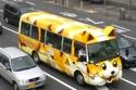 الحافلات تزين الشوارع