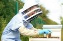 بداية خط إنتاج العسل من خلال منحل خاص من أجل عيون عملائها الأثرياء.