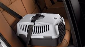 أفضل طريقة لاصطحاب الحيوانات الأليفة في السيارة