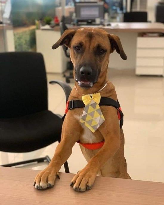 هيونداي تعين كلباً كموظف للمبيعات في البرازيل