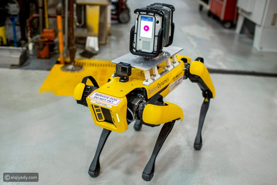 كلاب آلية تعمل لصالح شركة فورد