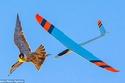 صقر يهاجم طائرة بالريموت 2