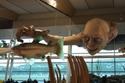 ويلينغتون، نيوزيلندا: يعرض مجسمّات لشخصيات The Lord of the Rings